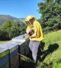 cyber-bee libraesva sustain hive api